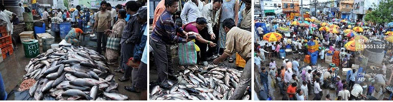 Are You a Seafood Lover and Foodie? Explore the Ramnagar Fish Market in Hyderabad