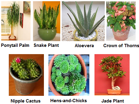 semi arid plants semi arid plants are similar to xerophytesXerophytes Plants