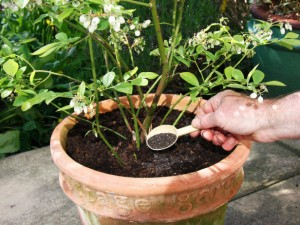 Fertilizers for Your Potted Plants