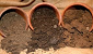 Types of Soils – Which One is Good for Potted Plants?